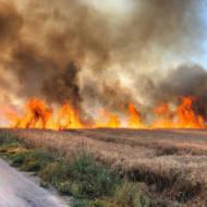 Palestinian Arson Terror